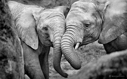 elefante.3